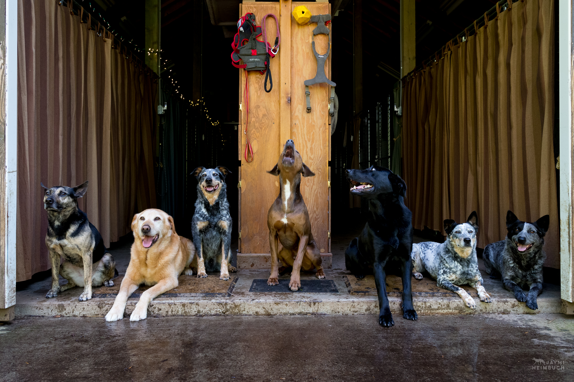 It's not common that Conservation Canine dogs hang out in free time together - especially not in an organized fashion like this! - but instead socialization with one another depends on personalities and balanced interactions.