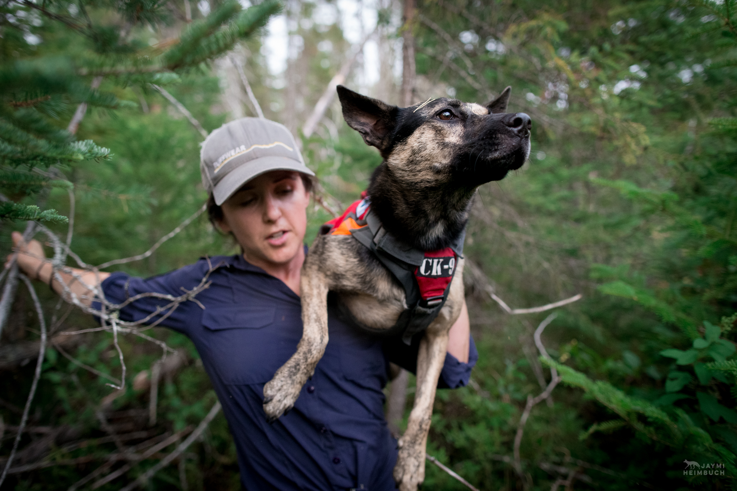 Scent detection dogs (canis lupus familiaris) and handlers often have to go through difficult terrain, and sometimes that means the dog needs to be carried by the handler, as Suzie Marlow demonstrates.