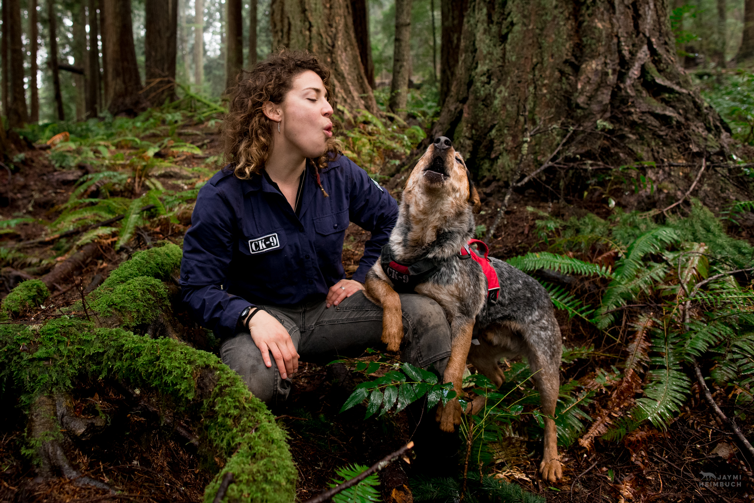 Hiccup, a rescued cattle dog, howls with a handler at Conservation Canines, University of Washington's Center for Conservation Biology, Washington