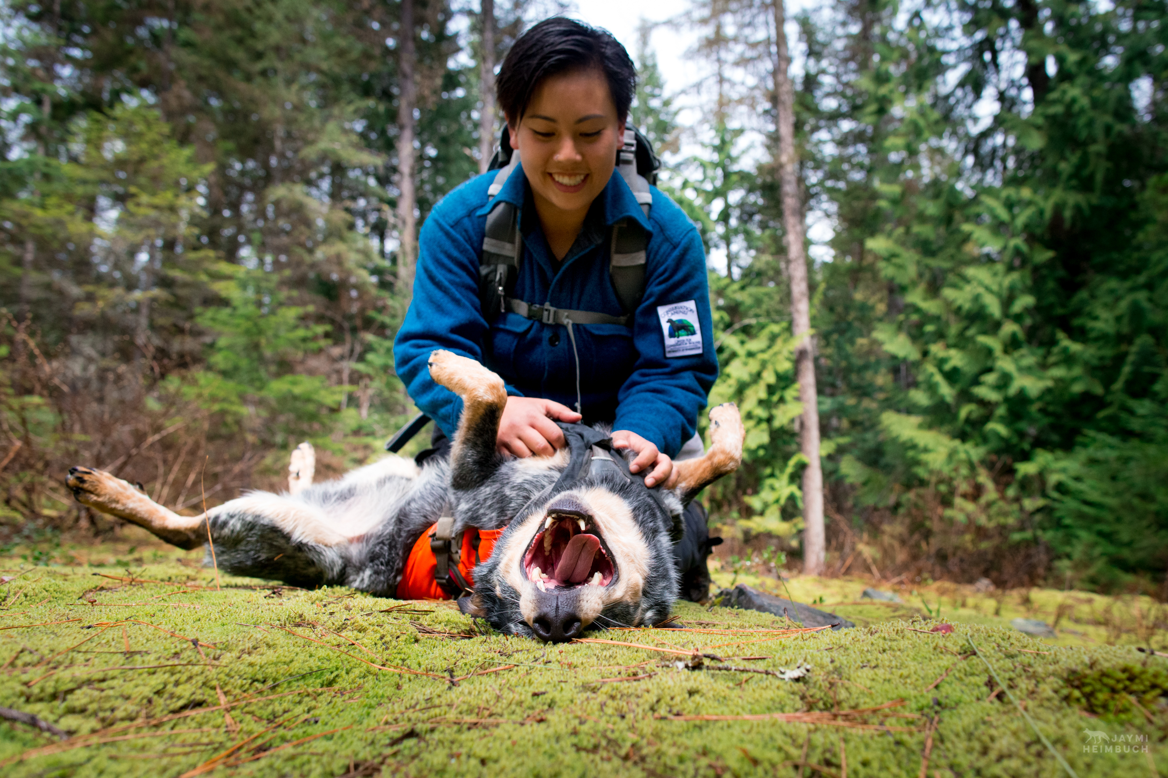 Field technician Colette Yee playing with scent detection dog Jack, Conservation Canines, University of Washington's Center for Conservation Biology, Washington