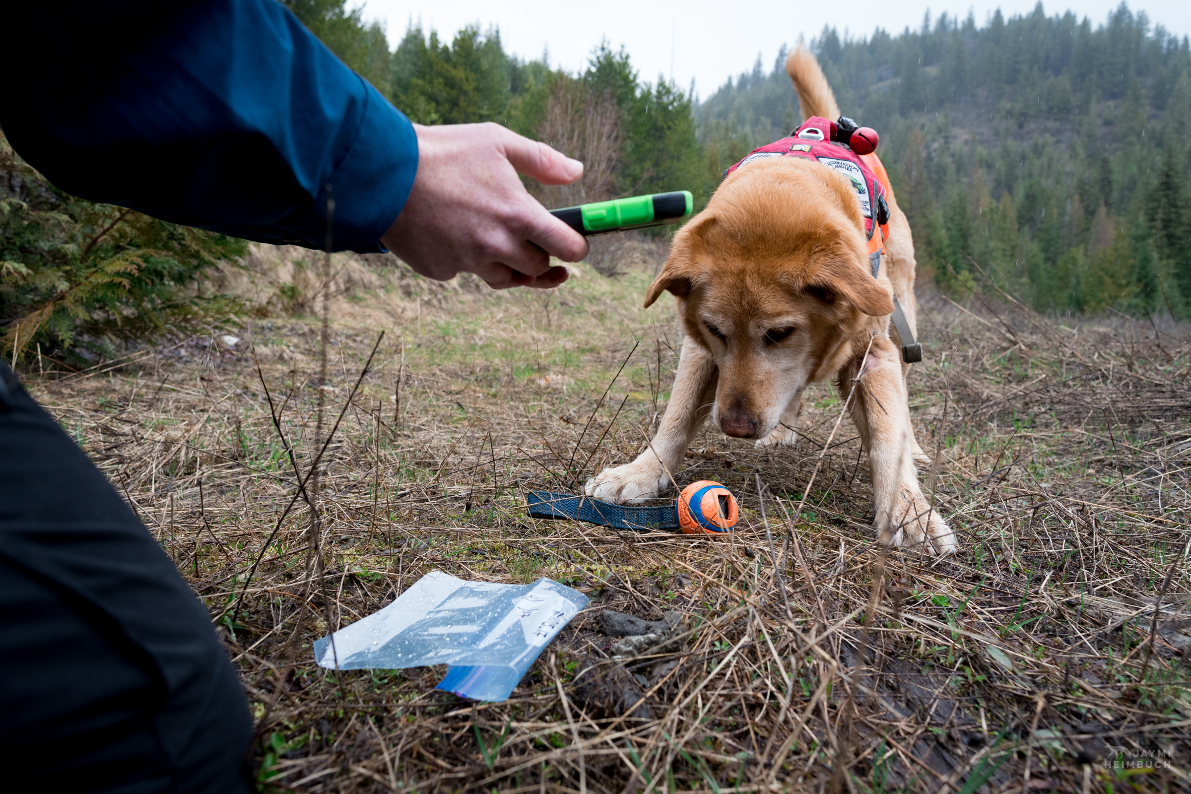 Field technician Rachel Katz recording a sample found by scent detection dog Chester, Conservation Canines, University of Washington's Center for Conservation Biology, Washington