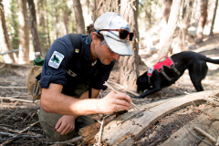 Field technician Caleb Staneck collects the scat of a mustalid species - likely Pacific fisher - while  scent detection dog (canis lupus familiaris) Winne plays with a ball as a reward for finding the scat. The team is part of University of Washington Center for Conservation Biology's Conservation Canines program.