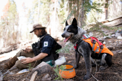Field technician Heath Smith notes data about cougar scat found by scent detection dog (canis lupus familiaris) Pips in California's Sierra Nevada mountains. The team is part of University of Washington Center for Conservation Biology's Conservation Canines program.