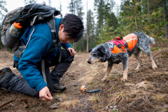 Field technician Colette Yee collecting scat found by scent detection dog Jack, Conservation Canines, University of Washington's Center for Conservation Biology, Washington
