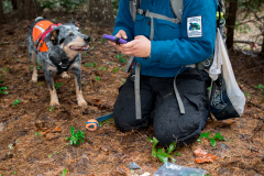 Field technician Colette Yee recording a sample found by scent detection dog Jack, Conservation Canines, University of Washington's Center for Conservation Biology, Washington