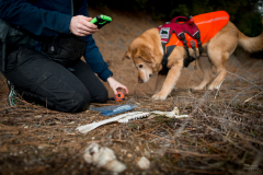 Field technician Rachel Katz records a sample found by scent detection dog Chester, Conservation Canines, University of Washington's Center for Conservation Biology, Washington
