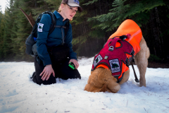 Field technician Rachel Katz follows scent detection dog Chester to a sample under the snow, Conservation Canines, University of Washington's Center for Conservation Biology, Washington