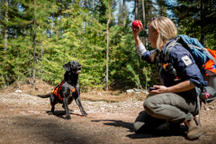 Field technician Julianne Ubigau rewards scent detection dog (canis lupus familiaris) Sampson in northeast Washington after he found a scat from a target species. The team is part of University of Washington Center for Conservation Biology's Conservation Canines program.