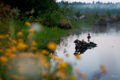 Wilflowers and duck at marshland in Beaver Creek Natural Area, Brian Booth State Park, Oregon