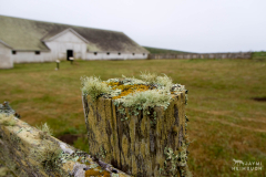point reyes national seashore, pierce point ranch
