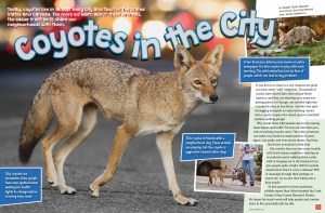 Coyotes-in-the-City-March-2019-RR-1