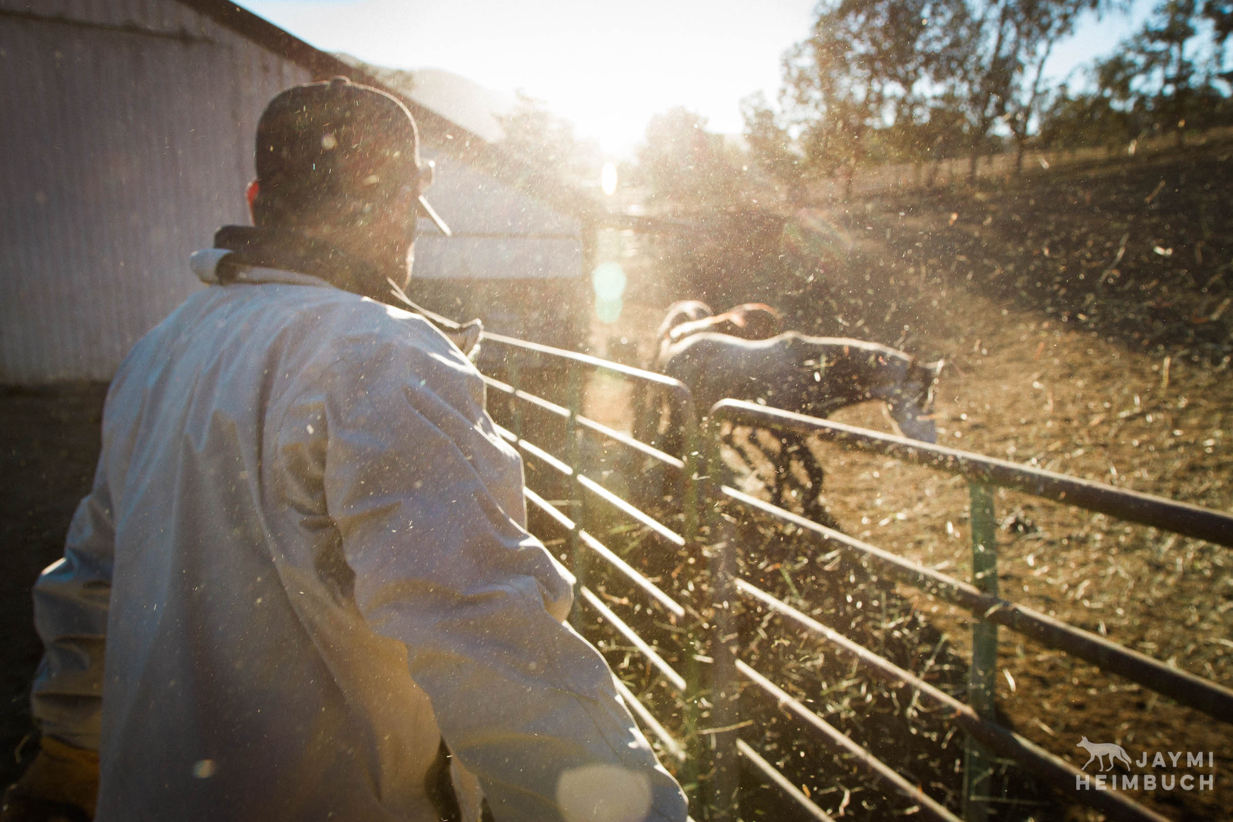 ranch worker with horses