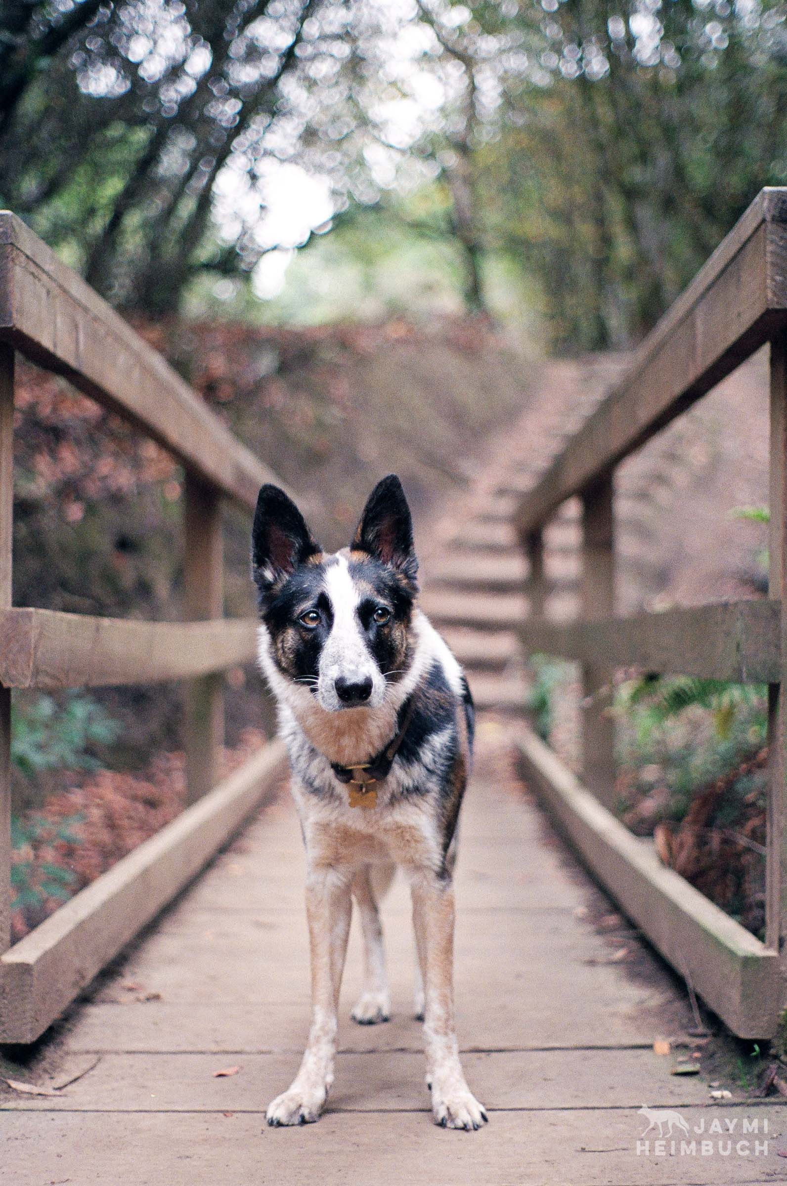 35mm film photo of a dog
