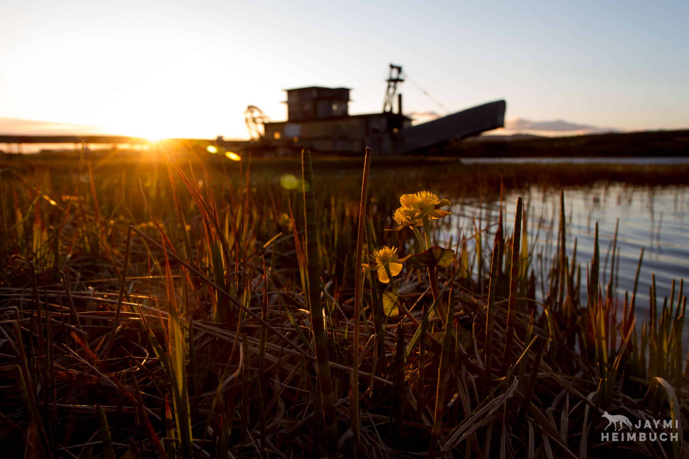 mining dredge and flowers in nome alaska