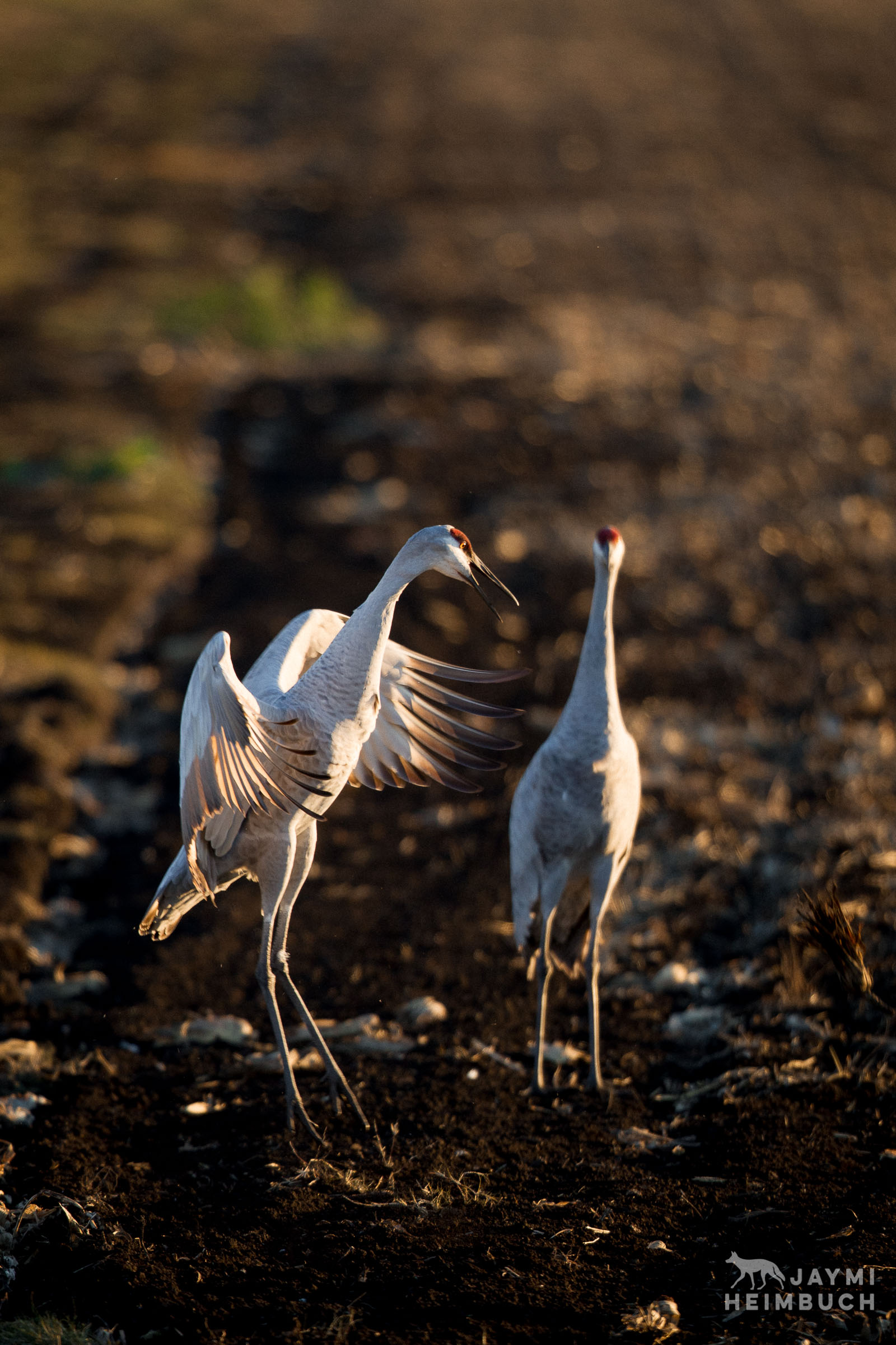 California's Farmers Are Critical to Bird Migration on the