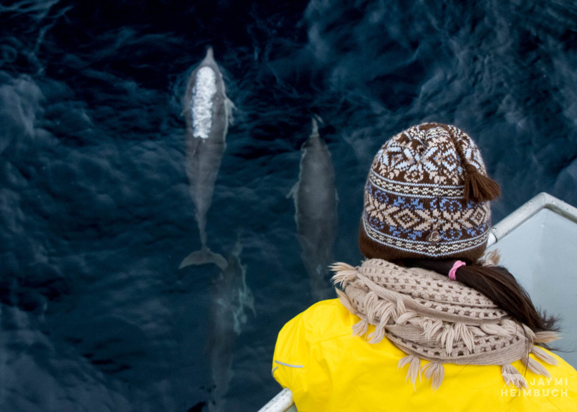 dolphins at bow of boat
