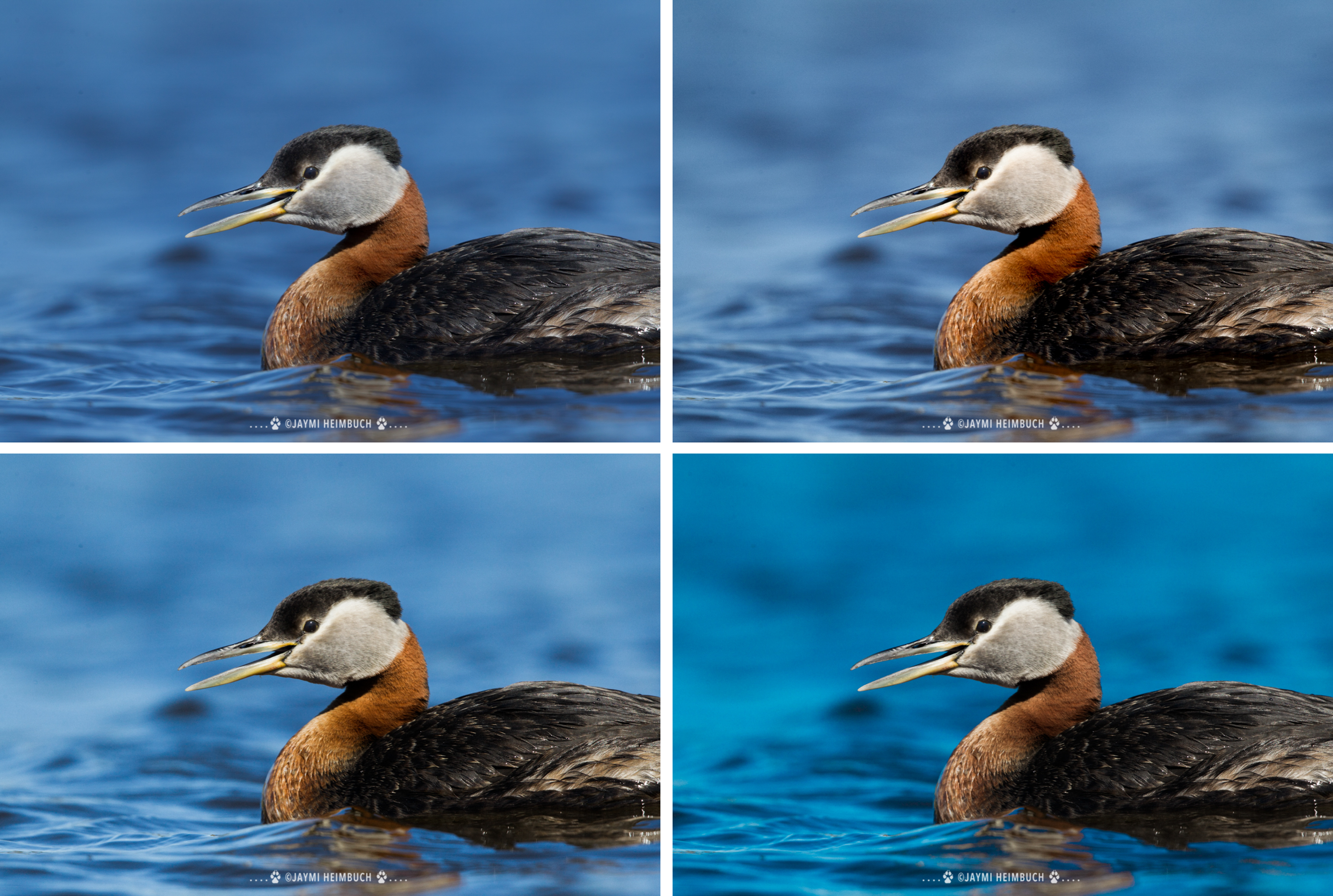 red-necked grebe mastin labs preset